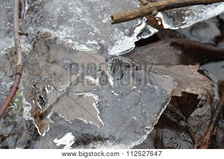 Ice on the Wetland