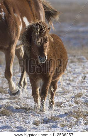 A Horse and Shetland Pony