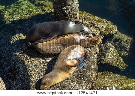 Sea lions on the rocks, Monterey, California