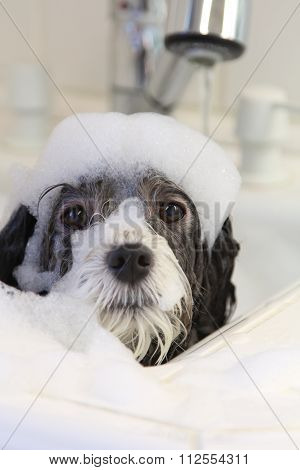 A dog taking a bubble bath.