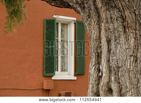 California Pepper Tree Framing Brown Painted Wall In Old Town