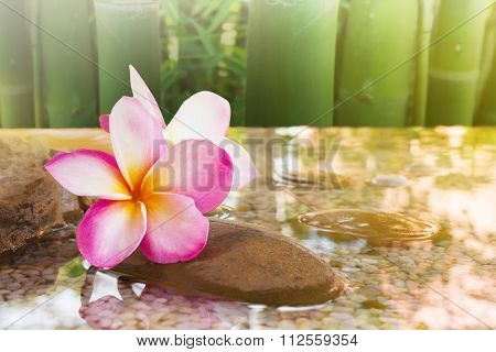 Beautiful Sweet Pink Flower Plumeria With Relaxing And Meditation Or Aroma Spa Mood
