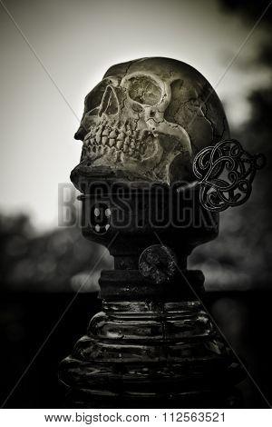 Still Life Art Skull