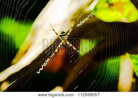 Spider Standing On The Spiderweb