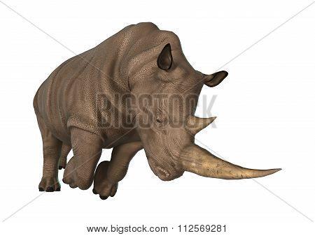 Wild  Rhinoceros On White