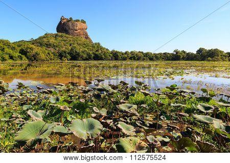 Landscape Of Lion Rock And Lake At Sigiriya, Sri Lanka