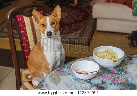 Basenji wonders when master is going to place true canine food on the table