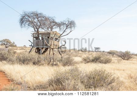 Hide In An Acacia Tree