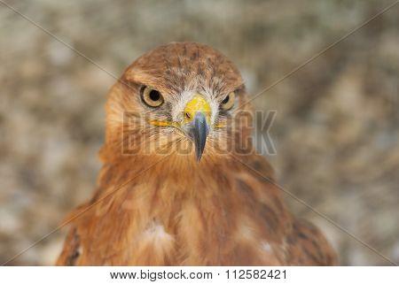 Portrait of bird of prey  in pastel shades