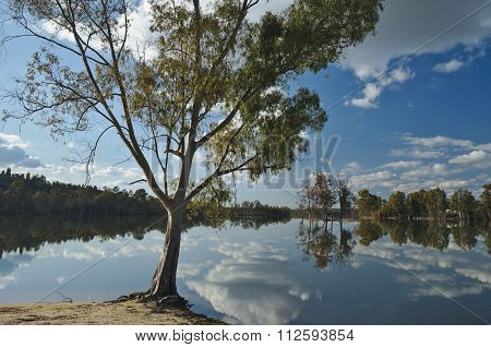 Tree And Reflections By The Lake