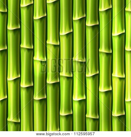 Seamless Bamboo Background. Vector Illustration, Eps10.