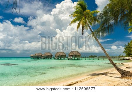 Overwater bungalows in a beach in Tikehau