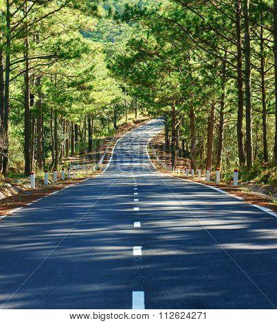 Landscape, Dalat, Pine Forest, Travel, Vietnam, Street