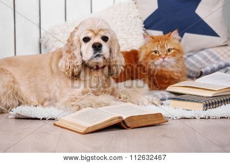 Cat and dog with books on sofa inside