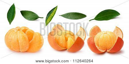 Tangerine,mandarin,clementine,leaves Set