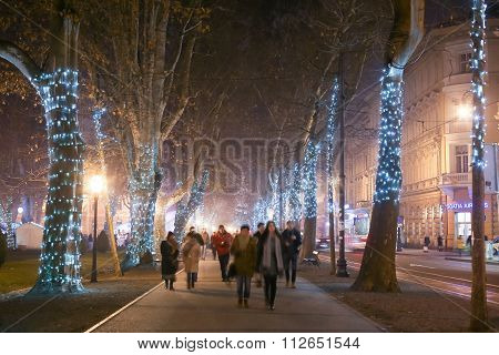 Illuminated Tree Alley On Zrinjevac