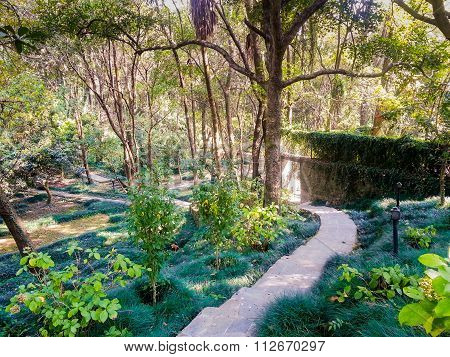 trekking path among trees and plants in baijnath india