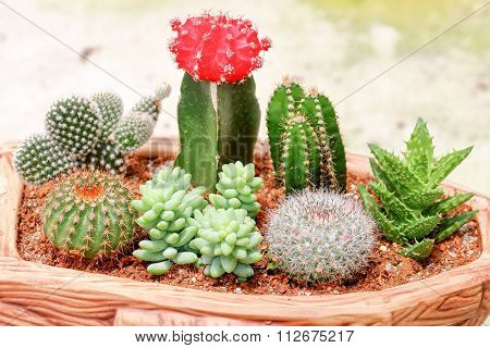 Thorny Cactus Plant With Flower
