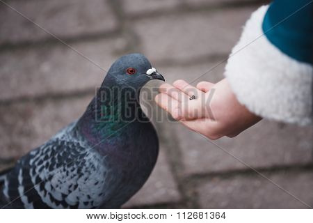 Girl Feeding Doves