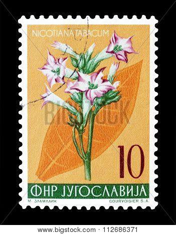 Yugoslavia 1955