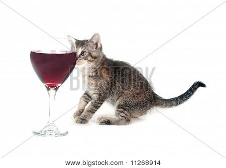 Cute Kitten And Wine Glass