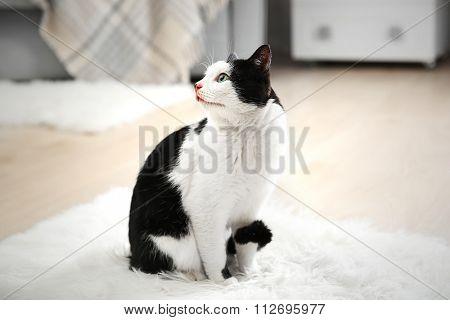 Beautiful cat on carpet, indoor