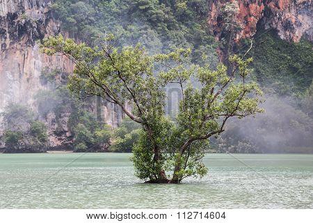 Lone Tree Grows At Railay Beach In Krabi, Thailand