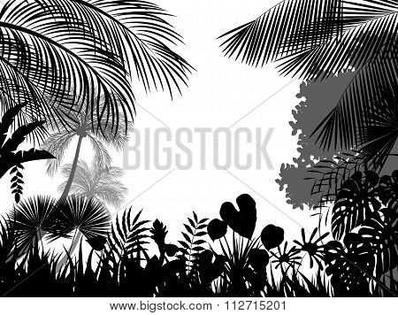 Tropical silhouette background beautiful.