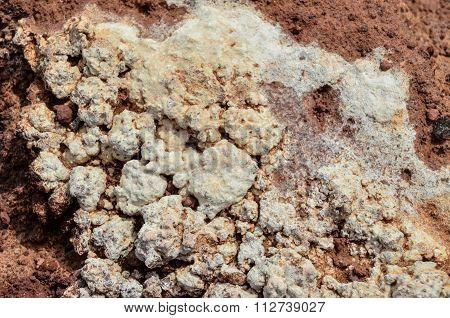 Lichen Texture Pattern