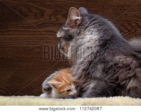 Cat and kitten. Mother and child. Mom hugging baby