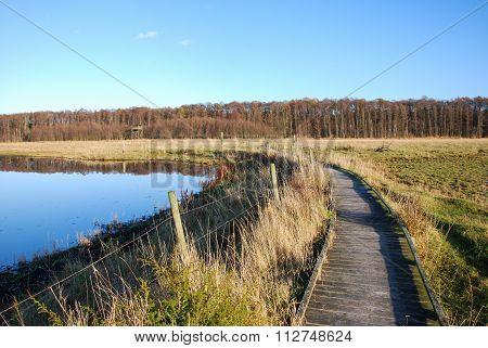 Wooden Footpath Through A Wetland