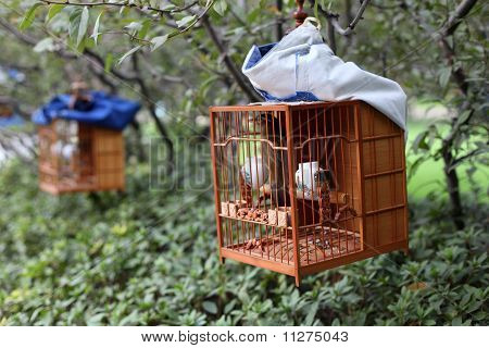Songbirds In Cages