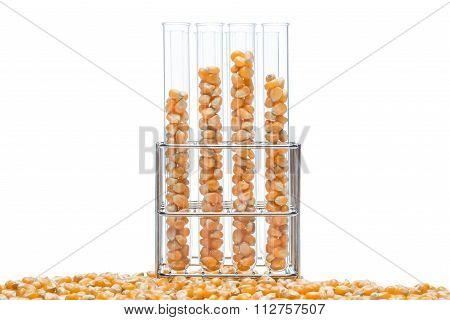 Research Corn, Biofuel And Gmo
