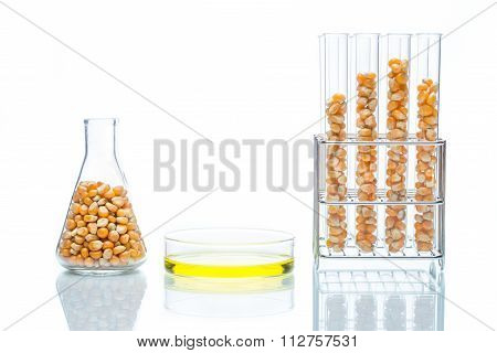 Research Corn Energy, Biofuel And Gmo In Laboratory