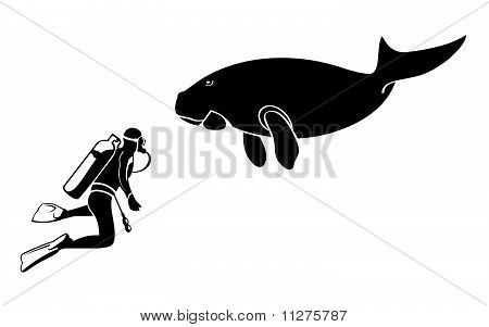 Scuba diver and dugong