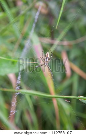 spider on the green background
