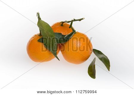Three Clementine Mandarines With Leaves On White Background.