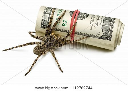 Venomous Spider Stand Guard Of Cash Isolated On White