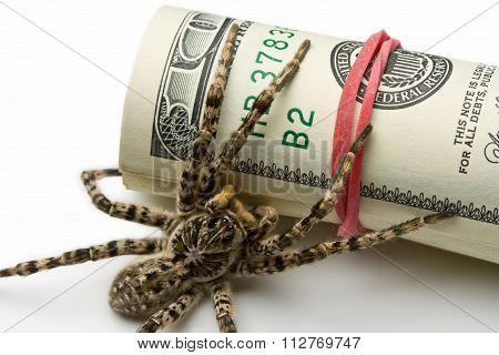 Macro Of Spider Behind Dollars Roll Isolated On White