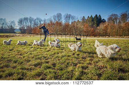 Time Stack Of A Havanese Dog Running