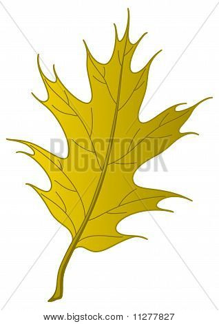 Leaf of an autumn oak Iberian
