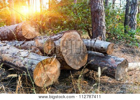 old wooden logs in autumn forest