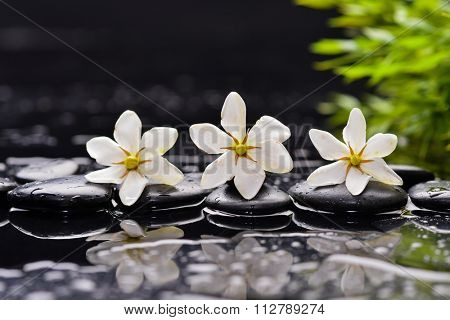 Still life with gardenia flower and green leaf on pebbles