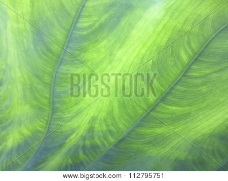 Artistic Shades and Lines of Green in Leaves