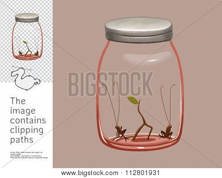 The illustration of a glass jar with two crickets inside. A part of Dodo collection - set of educational cards for children. The image has clipping paths so you can cut the image from the background.