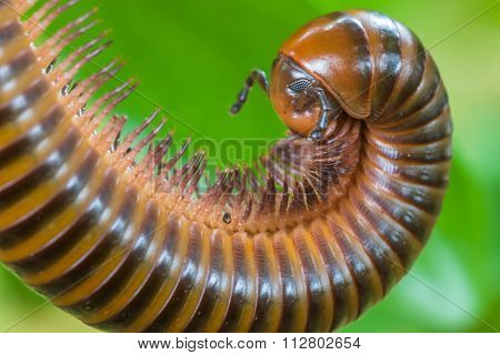 Millipedes Have Many Legs