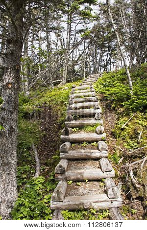 Wilderness Trail Stairs In Newfoundland