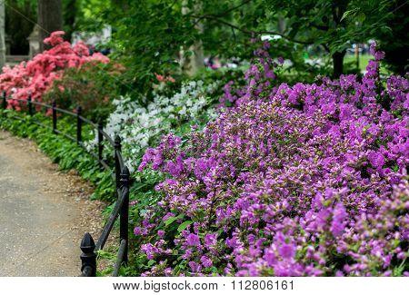 New York City Central Park Spring Bloom