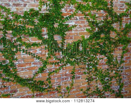 background, brick wall with ivy