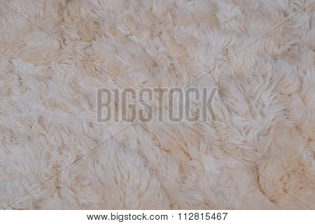 woolly sheepskin